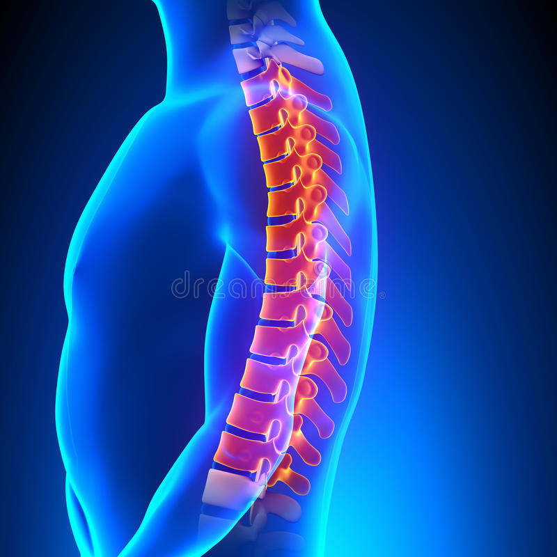 Thoracic Spine Anatomy Pain Concept Stock Illustration