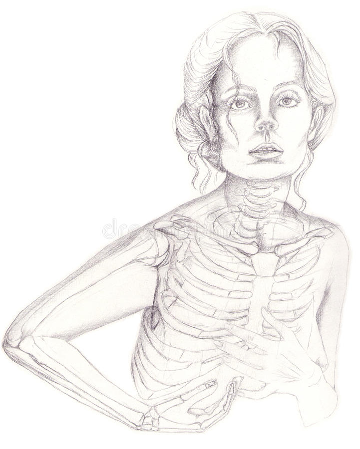 Thoracical cage and arm bones royalty free illustration