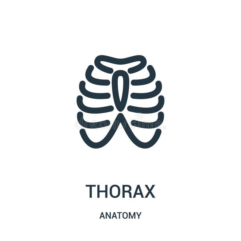thorax ikony wektor od anatomii kolekcji Cienka kreskowa thorax konturu ikony wektoru ilustracja Liniowy symbol dla używa na siec royalty ilustracja