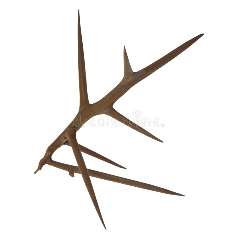 Free Thorn Stock Images - 4470504