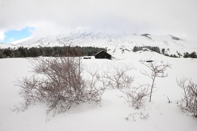 Thorn bushes in snow capped Galvarina Plateau, on backgrounf blurred refuge. Of Etna Park, Sicily stock photos