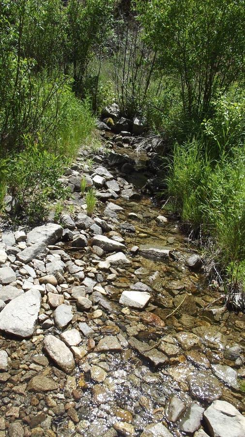 Thorn Creek 4 royalty-vrije stock afbeelding