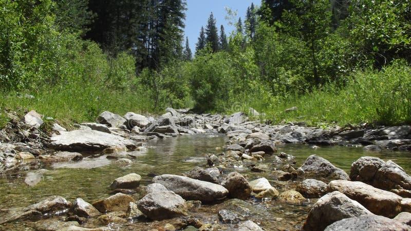 Thorn Creek 5 lizenzfreie stockfotografie