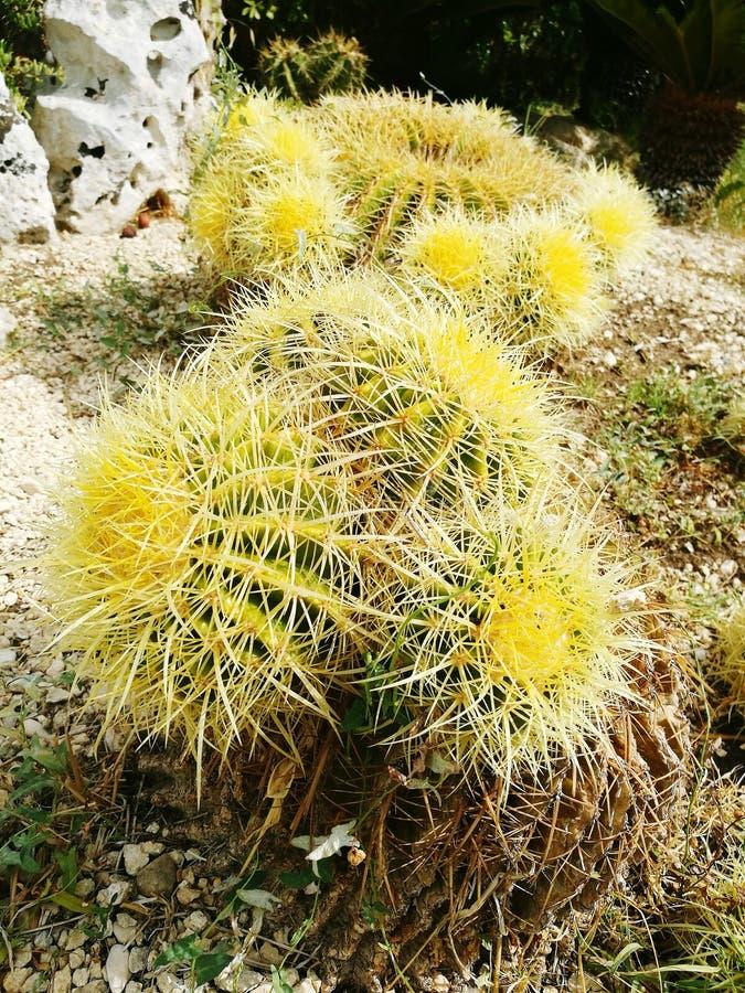 Thorned植物 库存图片