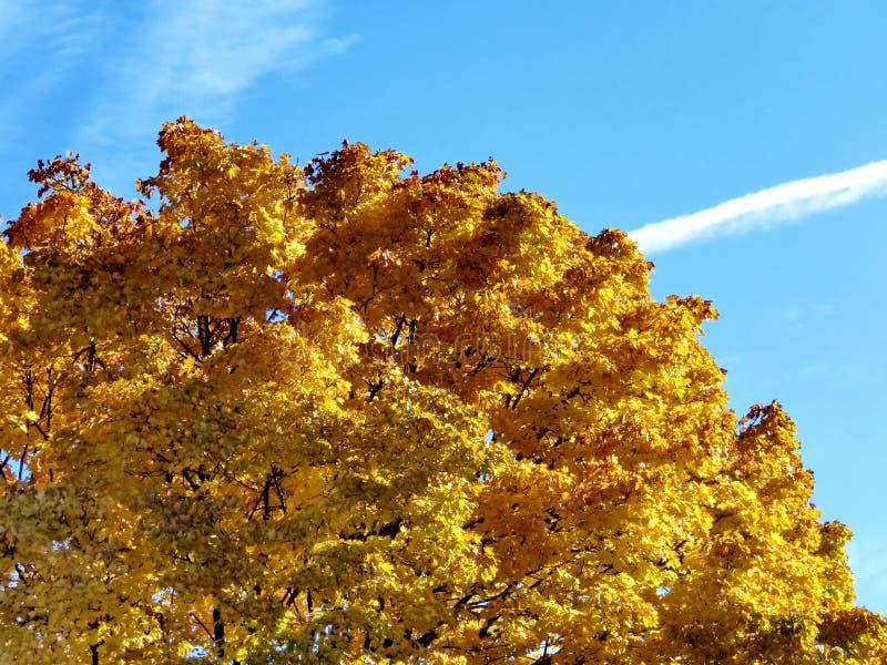 Thornhill el otoño muy hermoso 2016 imágenes de archivo libres de regalías
