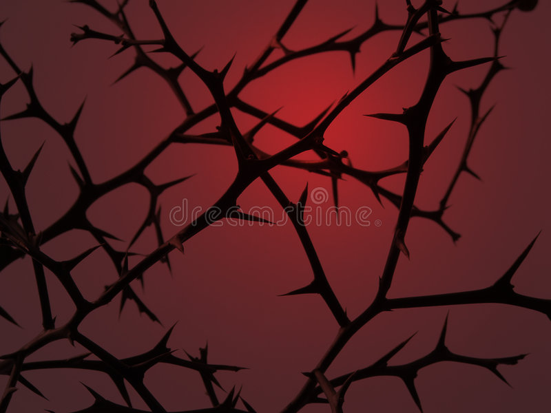 Thorns stock photography