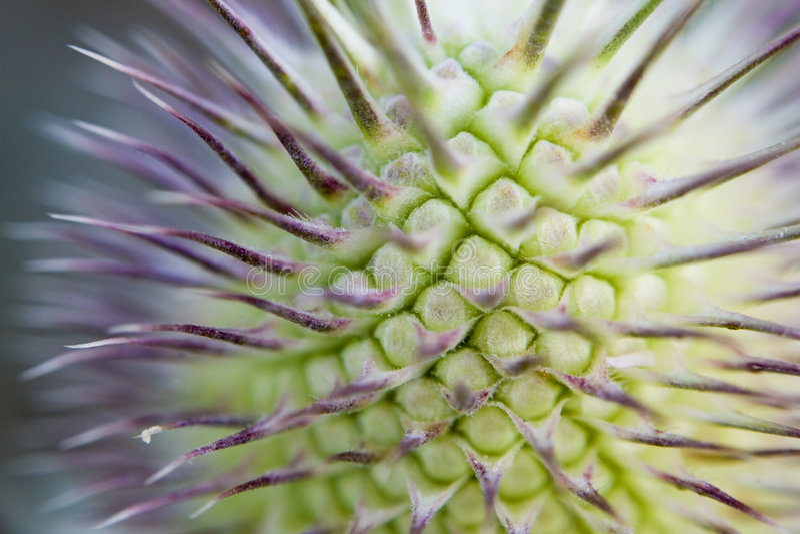 Thorns macro stock images