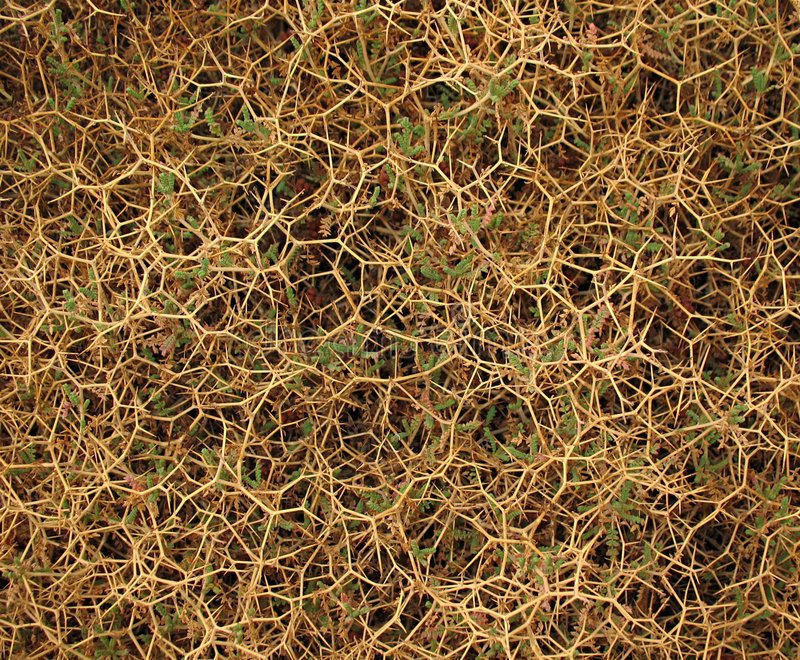 Thorny Background royalty free stock images