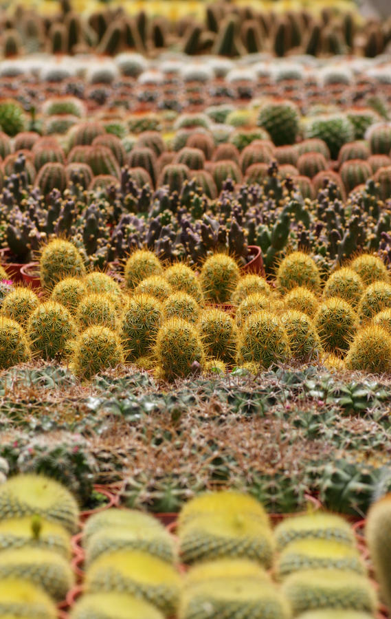 Download Thorny Cactus stock photo. Image of nobody, variety, cactus - 26306088