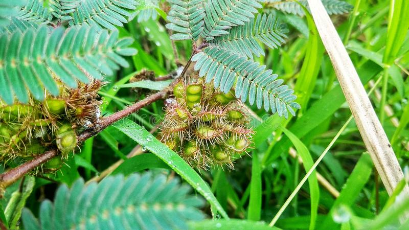 A Thorny Plant stock photo