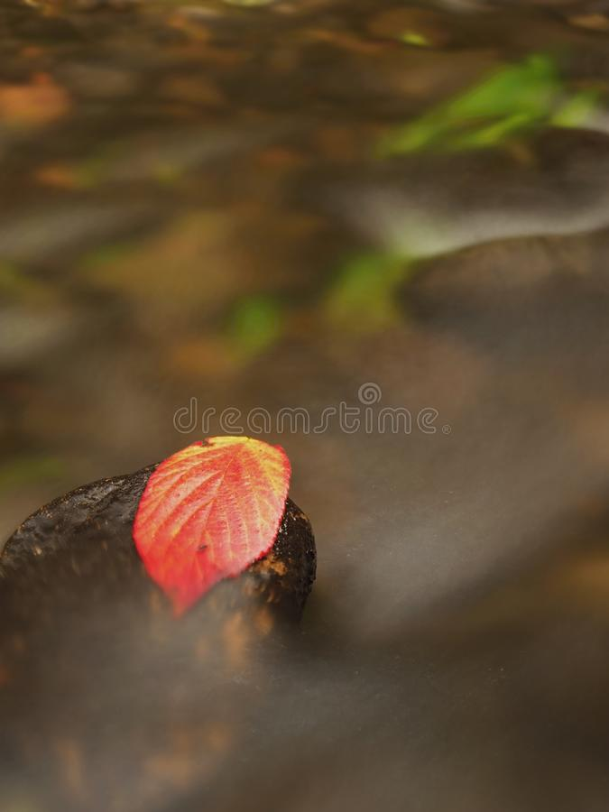 Download Thorny Raspberry Leaf Caught On Wet Stone. Lleaves Trapped In Middle Of Mountain Stream. Stock Photo - Image of boulder, fallen: 104787890