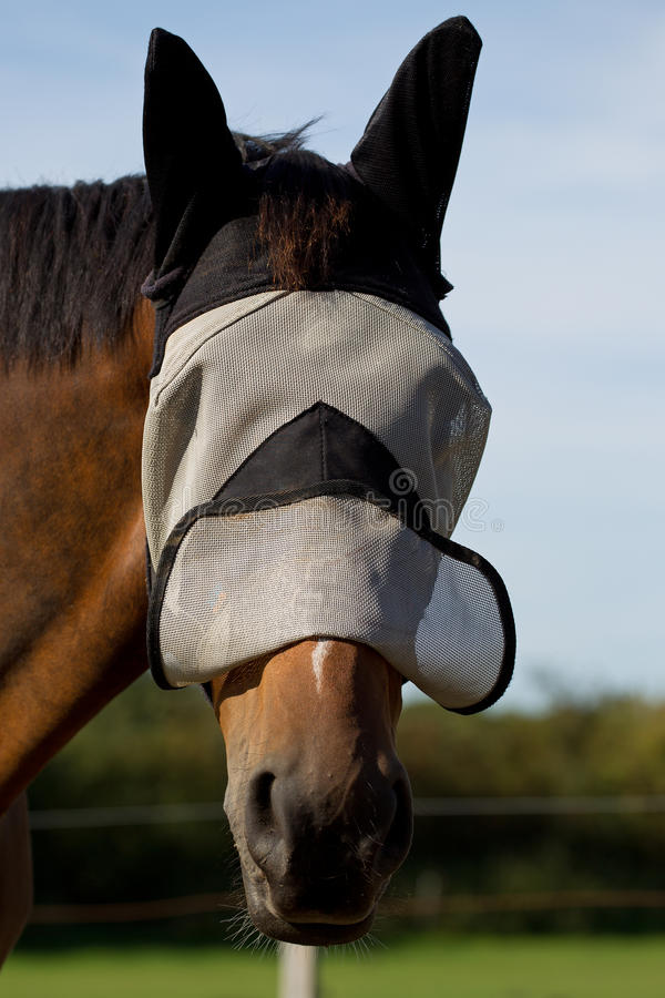 Download Thoroughbred Horse In A Fly Mask Stock Image - Image: 26480187