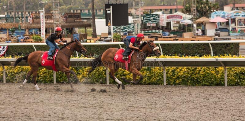 Thoroughbred koni rozgrzewkowa up duża rasa obrazy royalty free