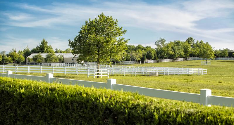 Thoroughbred race horse breeding farm. Stud farm. stock images