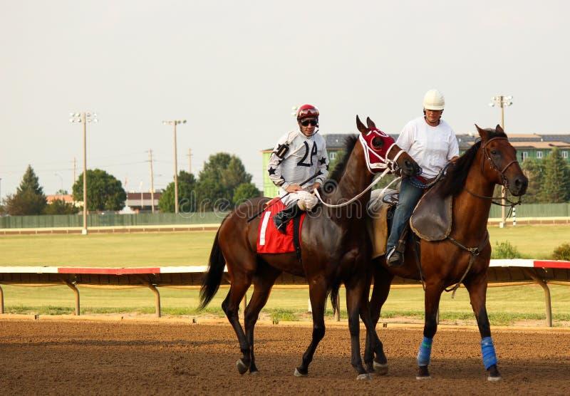 Thoroughbred Race Horse stock image