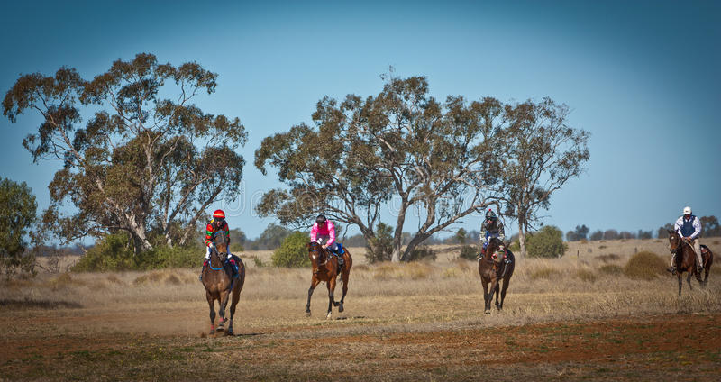 Thoroughbred race horses returning to scale in the Australian bush royalty free stock image