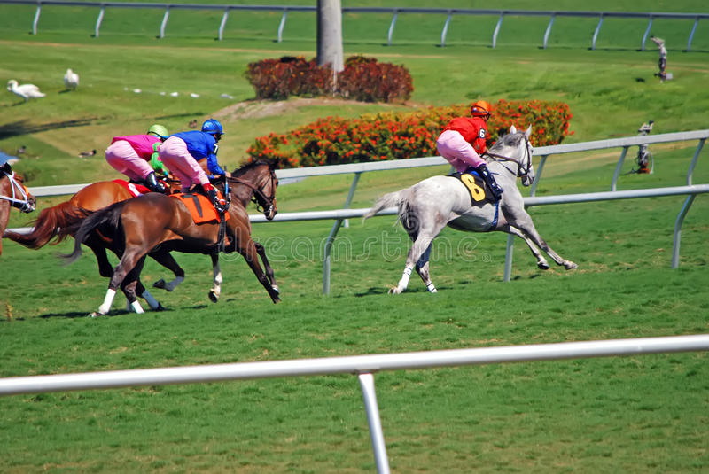 Download Thoroughbred Racing On Grass Stock Photo - Image of racing, equestrians: 19080148