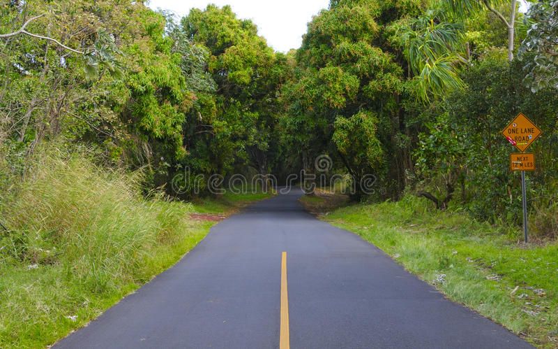 Thorugh da estrada a floresta tropical havaiana foto de stock royalty free