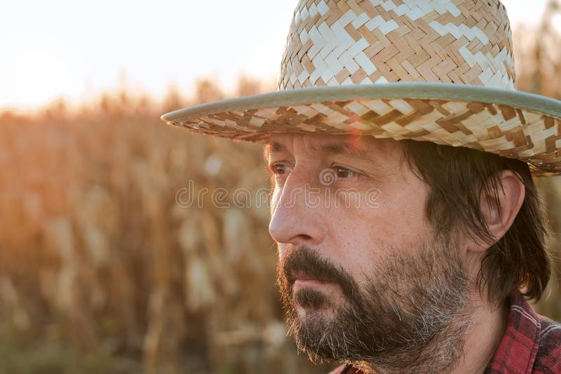 Thoughtful concerned corn farmer agronomist posing in maize crop field stock photography