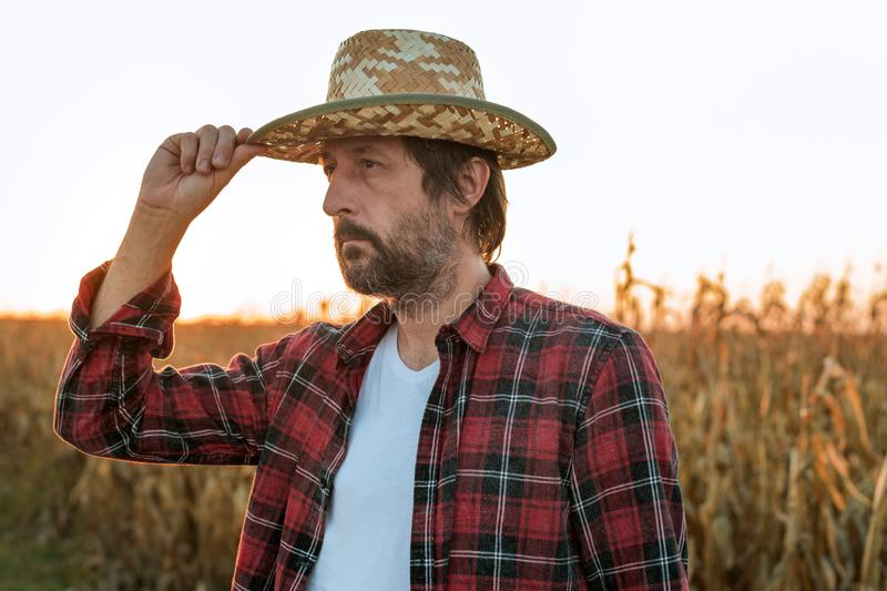Thoughtful concerned corn farmer agronomist posing in maize crop field stock images