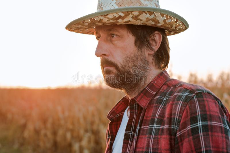 Thoughtful concerned corn farmer agronomist posing in maize crop field stock image