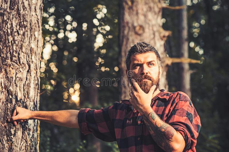 Thoughtful man standing next to tree. Curious lumberjack holding his chin. Hipster wandering in nature stock photography