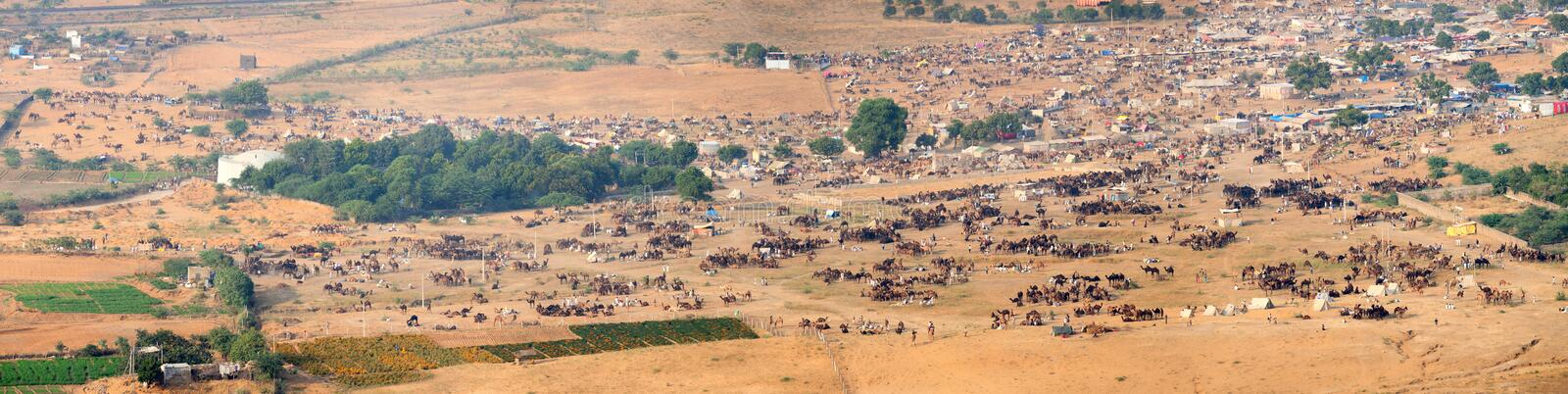 Thousands of Camels and Other Livestock at Pushkar Camel Fair in stock photo