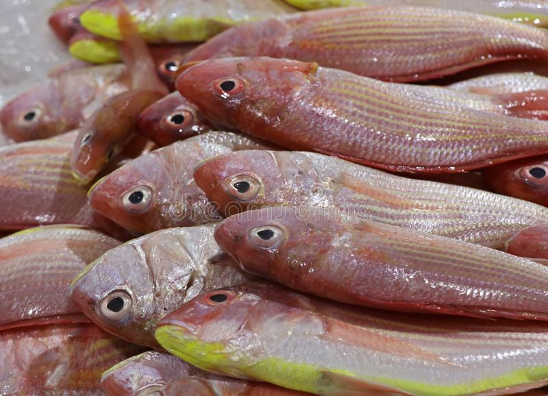 Thread fin bream fish on ice in a market stall stock photos