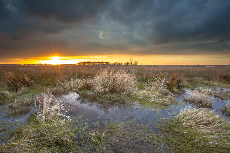 Threatening dark sky over swamp area during sunset. Imminent clouded sky over Leekstermeer inundated natural area. This place is ment to store water royalty free stock photos
