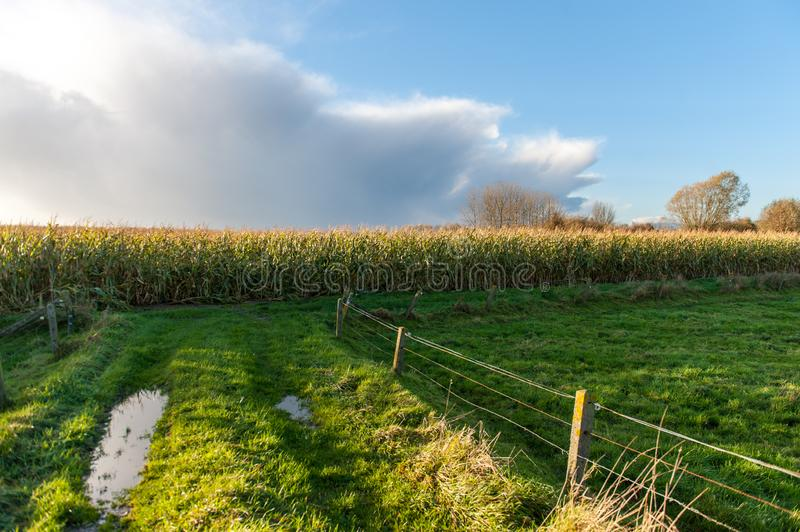 Late Afternoon Illumination in Flanders. A threating sky over and east flemish landscape, just before sunset royalty free stock images