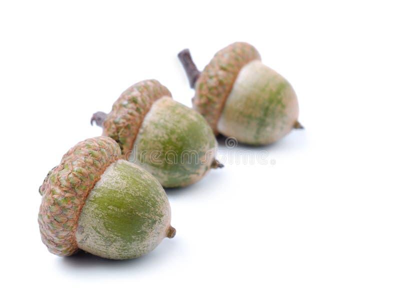 Download Three acorns stock image. Image of flora, seed, acorn - 15847693