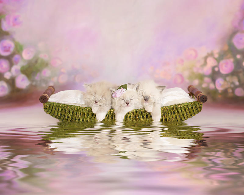 Three adorable kittens in a boat stock photos