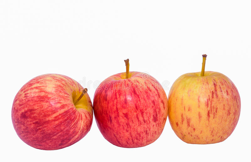 Three Apple. Apple is a small perennial plant Crown broad oval leaves alternate, densely branched. Flowering occurs with new leaves in the spring. Typically, the royalty free stock photography