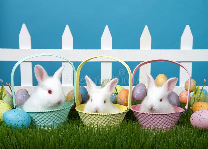 Trio of baby bunnies in easter baskets stock image