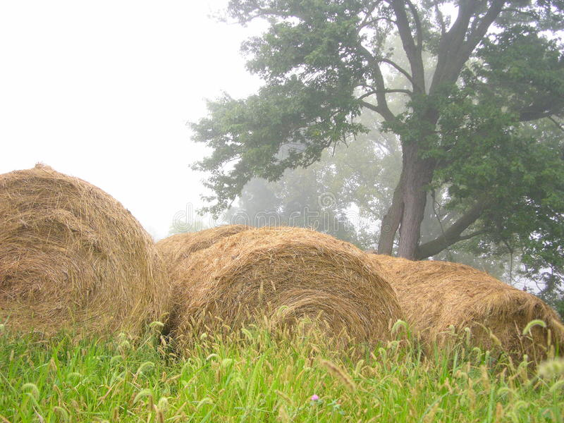 Three bales in the fog royalty free stock photo