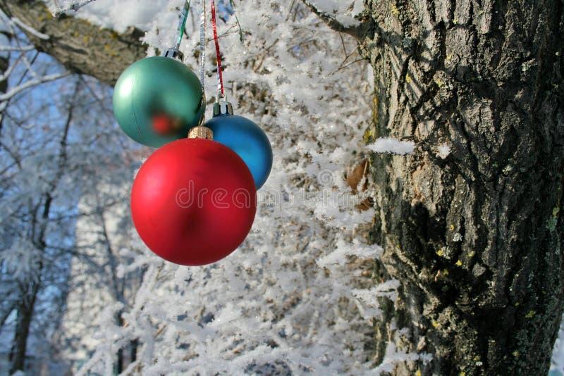 Three Balls on branch of the tree