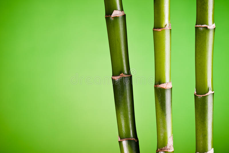 Three bamboo stems on green