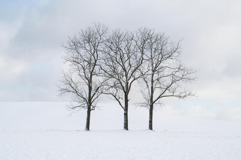 Three bare trees standing straight in a filed of snow on a cloudy day stock photography