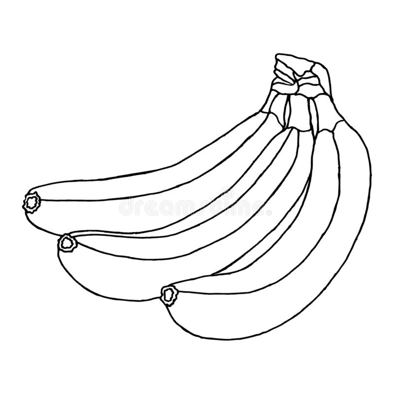 Three beautiful bananas isolated on a white background. Illustration for coloring book stock photography