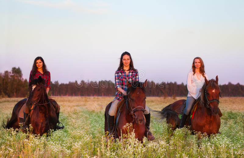Three beautiful female equestrians in the field. Three beautiful female equestrians going astride the chestnut brown horses in the field at sunset stock photos