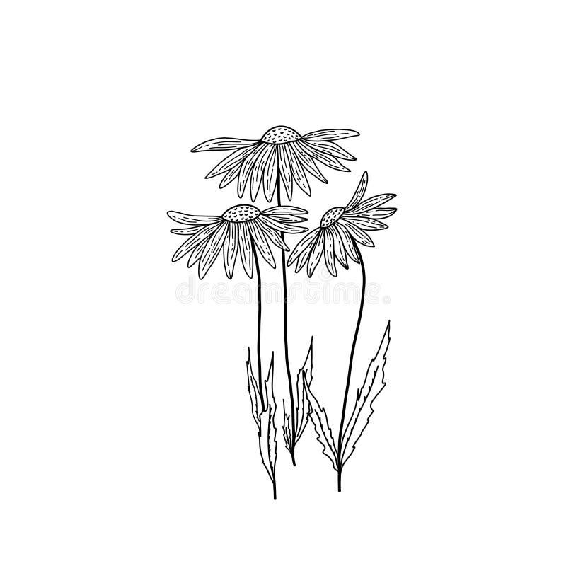 Three beautiful flowers on a thin long stalk. stock illustration