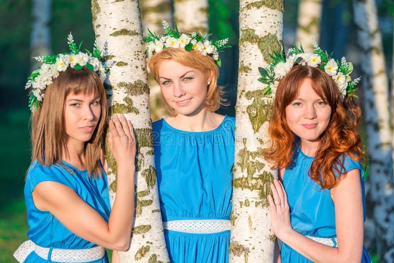Three beautiful girlfriends about birch trees stock photo