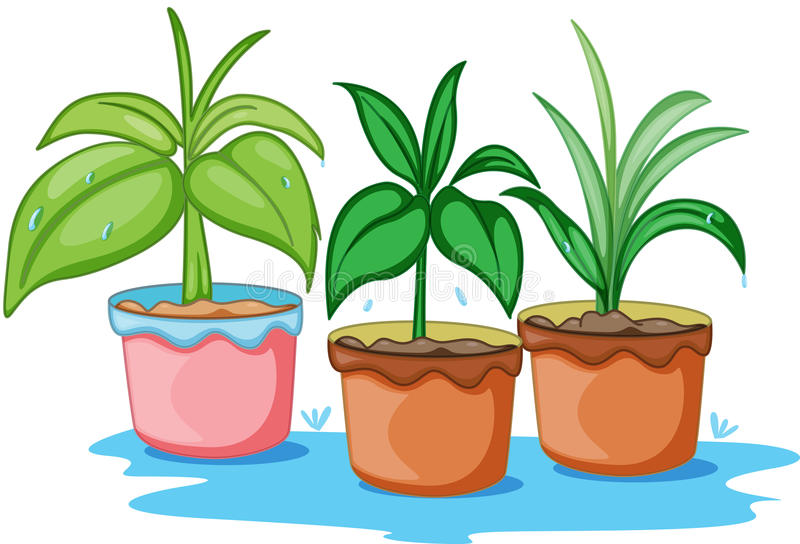 Three beautiful plants stock illustration