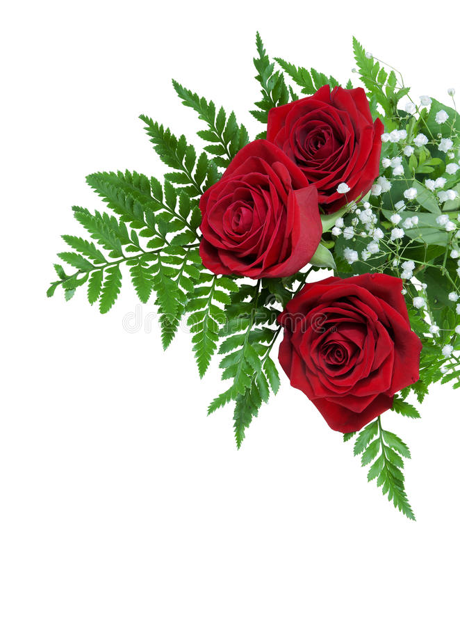 Three Beautiful Red Roses On A Fern Leaf With Tiny White Flowers ...