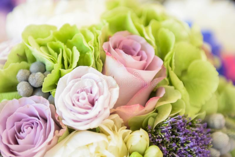 Three beautiful roses in different pink colors in a flower bouquet royalty free stock images