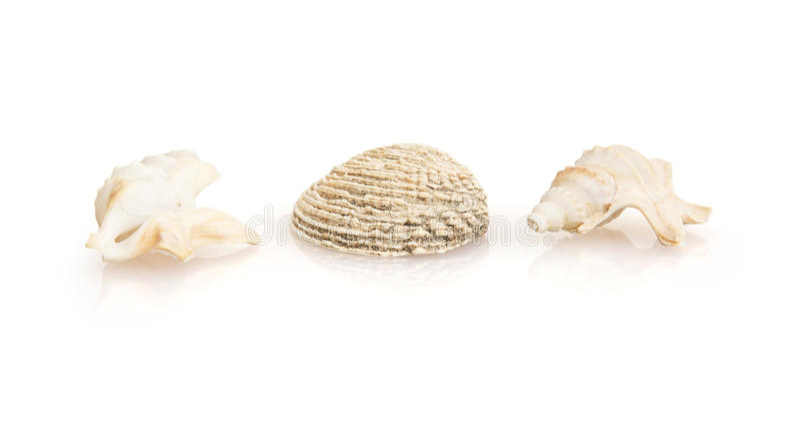 Three beautiful sea shells stock image