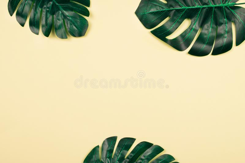 Monstera leaves on yellow pastel background. royalty free stock image