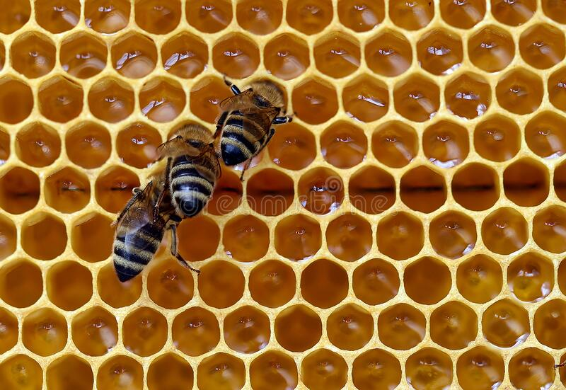 Three bees on a honeycomb stock images