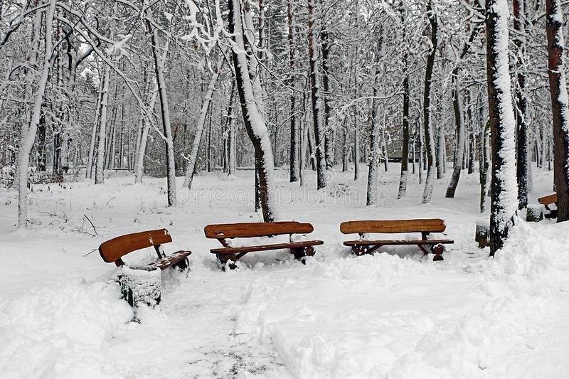 Three benches in the winter. stock images