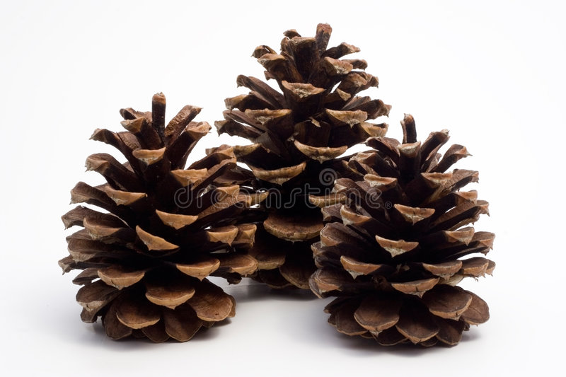 Download Three big pine cones stock photo. Image of white, winter - 1196476